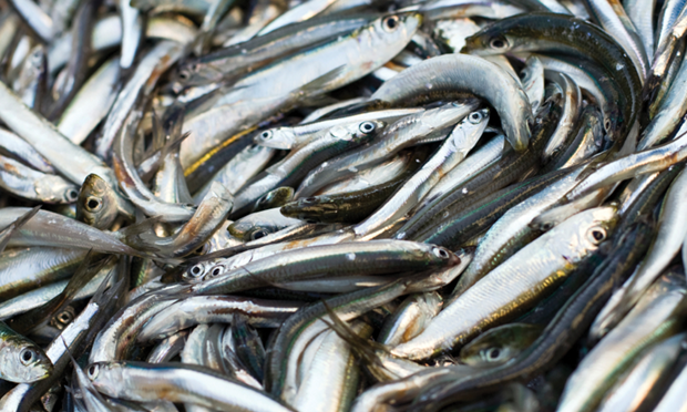 Top 5 Therapeutic Uses of Omega-3 Fatty Acids
