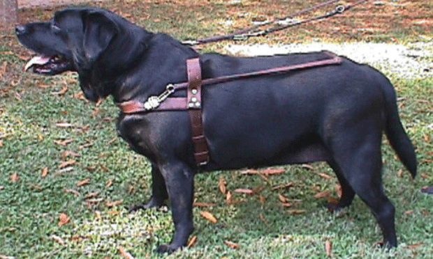 Canine Obesity-A Treatable Condition
