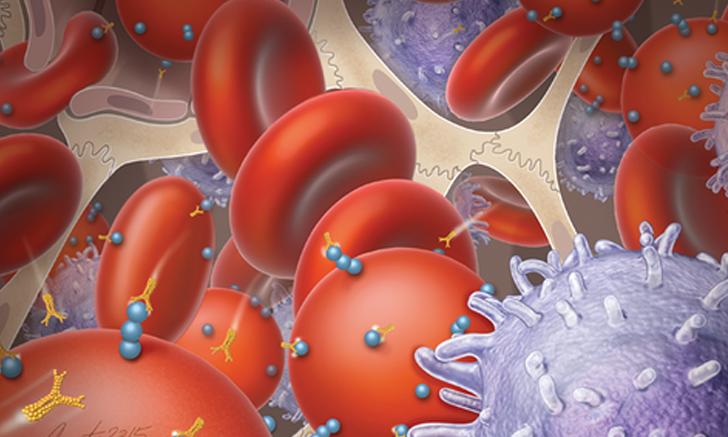 Hemotropic <em>Mycoplasma </em> spp