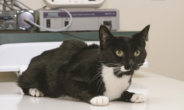 Chronic Kidney Disease in Cats with Hyperthyroidism