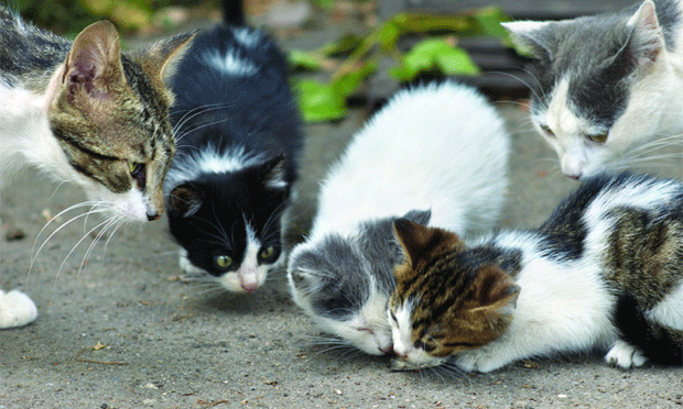 Animal Hoarding