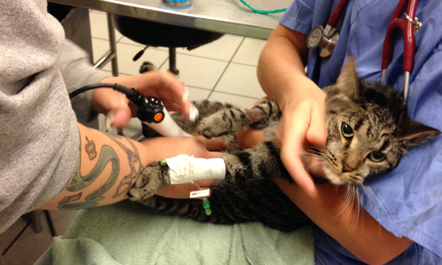 Palliative Care for the Hospitalized Pet