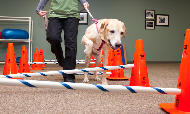 5 Essential Therapeutic Exercises for Dogs with Osteoarthritis