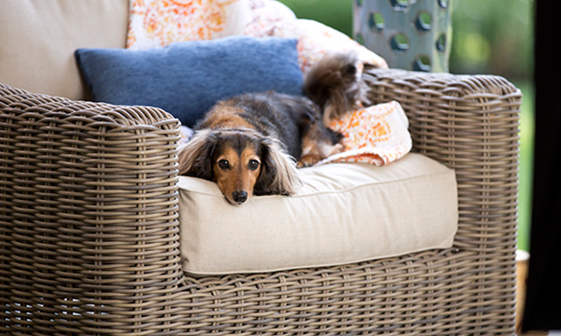 Stress in Our Dogs: Common Triggers & Signs