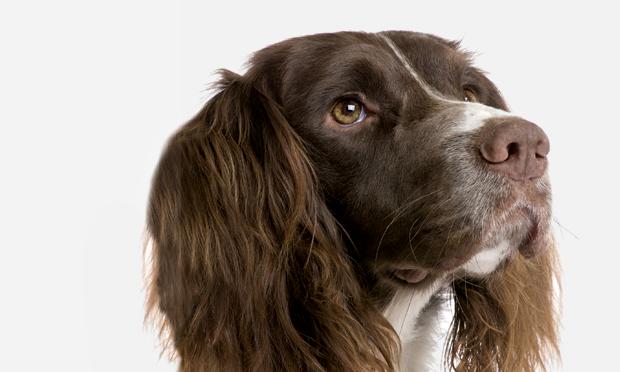 Progressive Cerebellar Ataxia in an Adult Dog