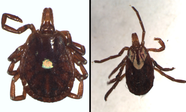 Practical Guide to Tick-Borne Disease
