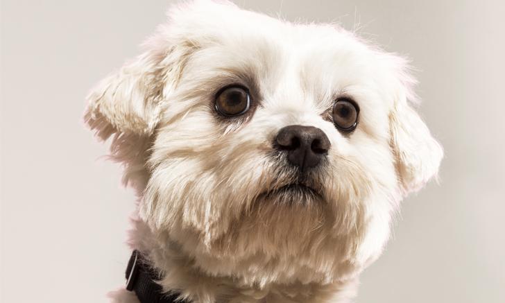 Hematochezia in a Dog