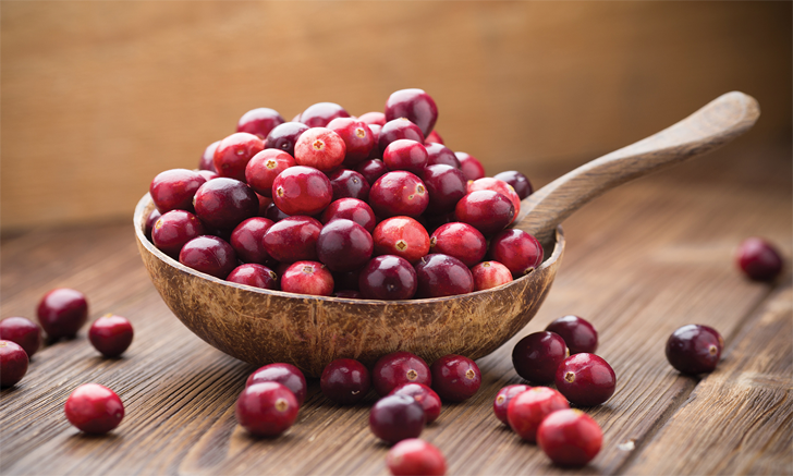 Cranberry Extract & UTIs in Dogs