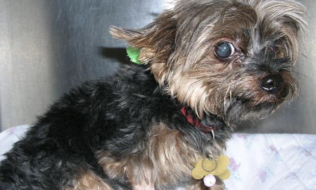 Chronic Diarrhea in a Dog