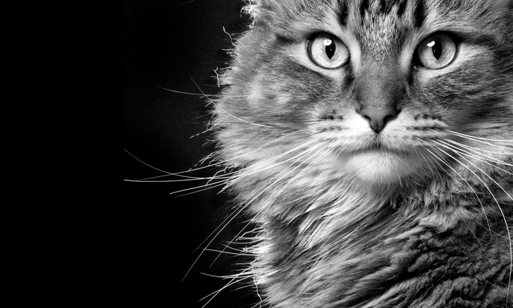 Top 5 Genetic Diseases of Cats