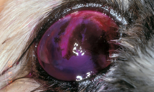 The Concept of Corneal Protection