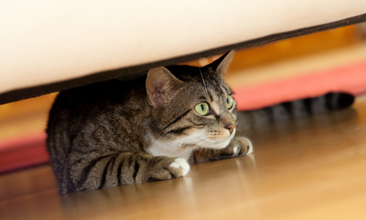 Quiz: Anxiety Disorders in Dogs & Cats