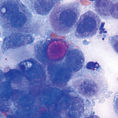 canine transitional cell carcinoma