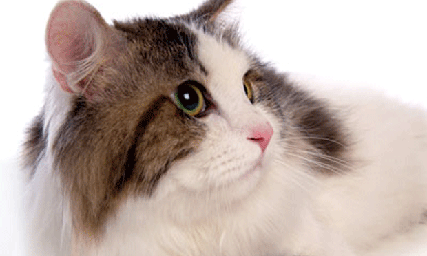Analgesia for Declaw Patients