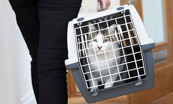 5 Quick Tips to Handle Fractious Cats