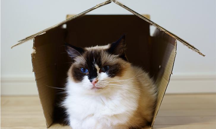 Long-Term Management of Feline Idiopathic Cystitis
