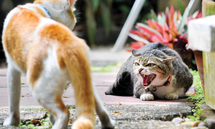 Feline Retroviruses: Seroprevalence & Risk Factors