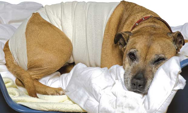 Nutritional Support for Critically Ill Dogs & Cats