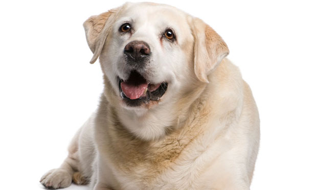 Increased Liver Enzyme Activity in a Dog