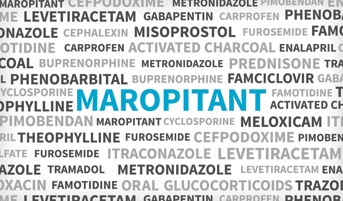 Maropitant