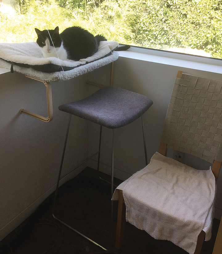 Chairs of various heights were added to allow this 15-year-old cat continued access to a favorite window perch.