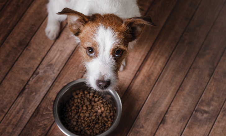 Top 5 Pet Food Protein Principles