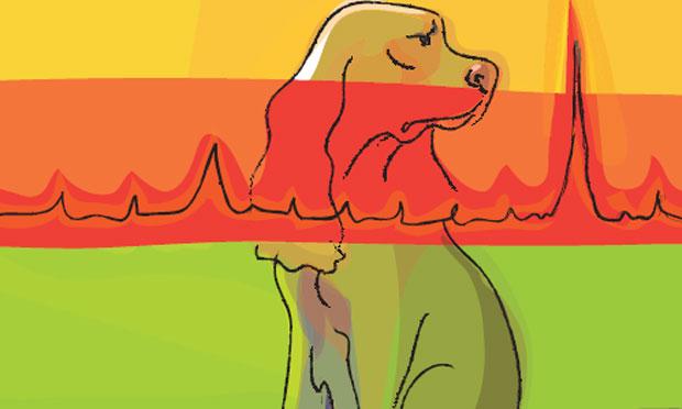 Canine Heart Murmur