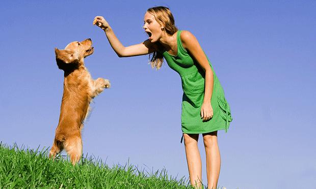 Dog Whisperer or Old Yeller?