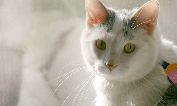 What Cat Owners Can Learn About Captivity