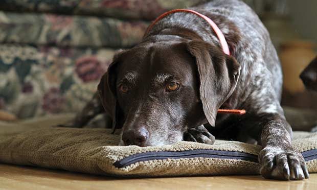 Veterinary Hospice: Medicate, Meditate, Mitigate