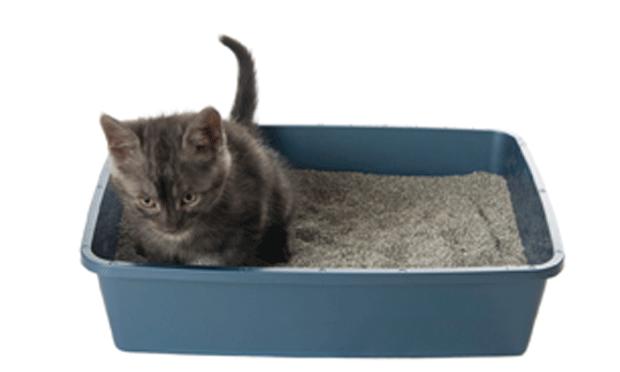 Feline House Soiling