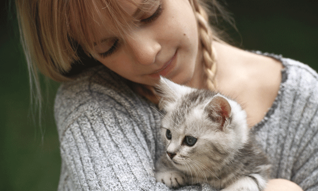 Educating Clients on Kitten Behavior