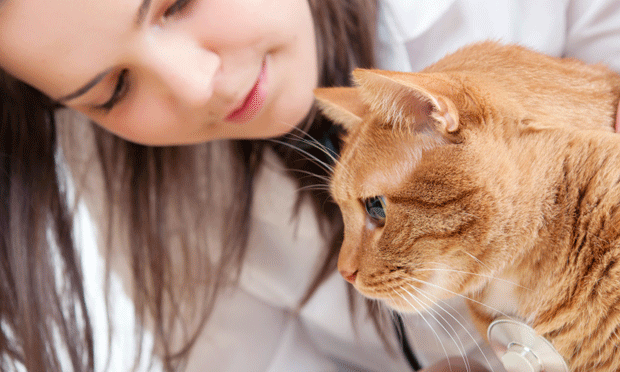 How to Manage Lower Urinary Tract Signs in Cats