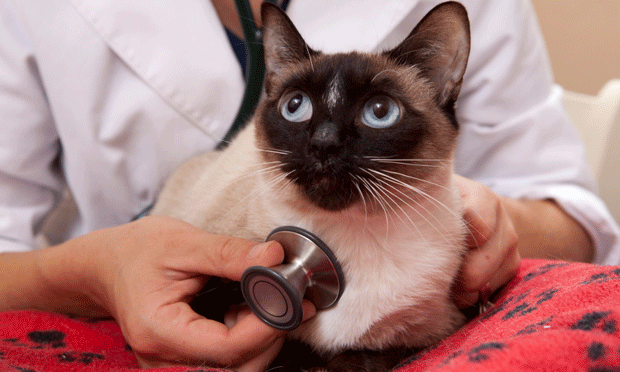 CATalyst Council Aims to Increase Feline Veterinary Visits: An Interview with Executive Director Jane Brunt