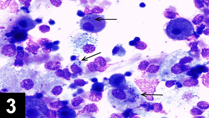 Infectious Respiratory Disease in a Dog | Clinician's Brief