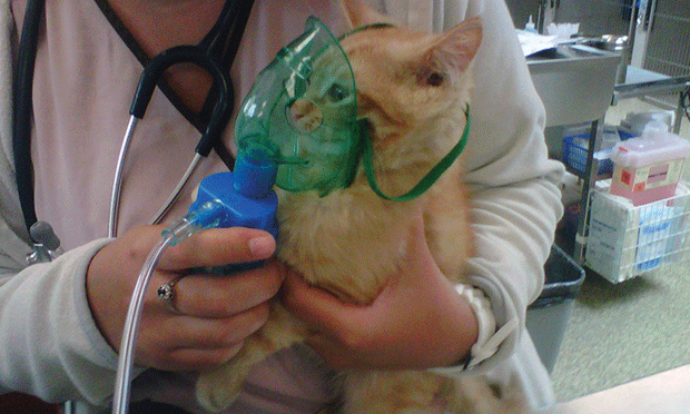 Aerosol Therapy in Dogs & Cats