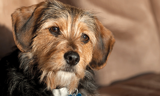 The Case: Coughing, Gagging, & Ataxia in a Young Terrier Mix