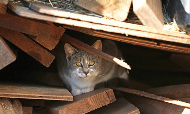 Preventive Care for Outdoor Cats